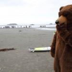 E' vero! In Canada ci sono orsi ovunque