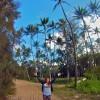 Palme-Hawaiane