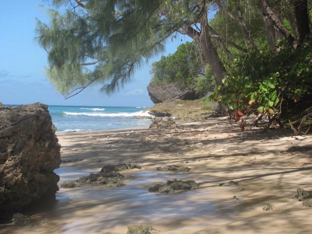Surf a Barbados 012