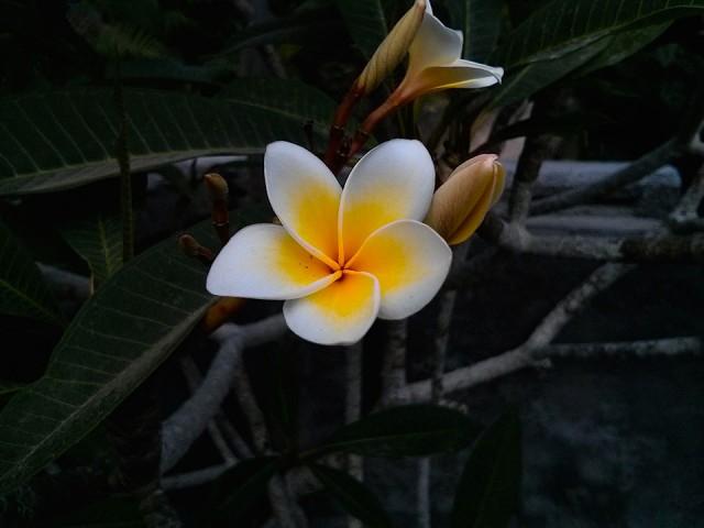Bali,mondi-interiori-e-universi-paralleli07