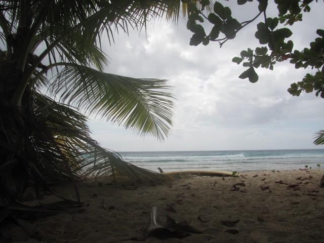 Surf a Barbados 08